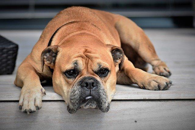 Het belang van je hond ontwormen